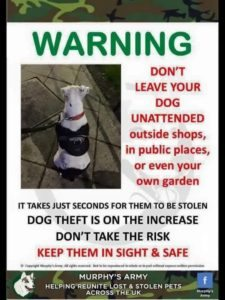 dog-theft-poster